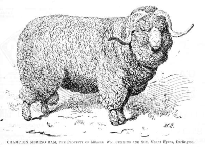 The expansion of the Wool industry_1830